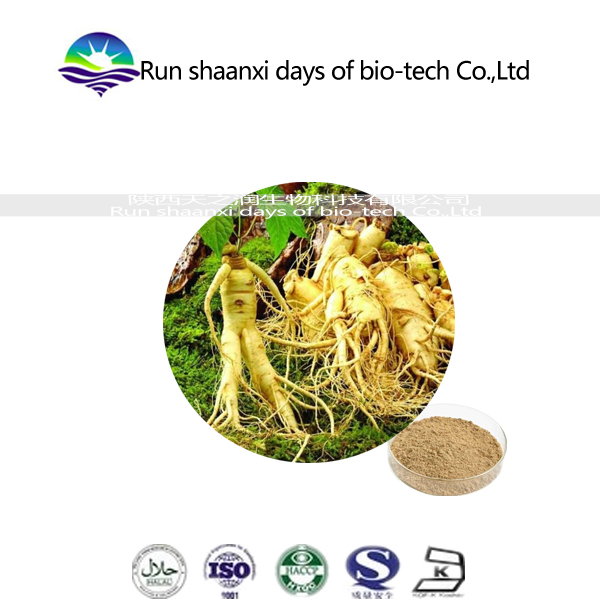Free sample Chinese factory Natural herbal extract powder ginsenosides HPLC ginseng root/panax Ginseng extract