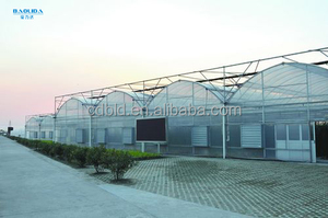 Galvanized Steel Structure multi-span commercial/agriculture plastic greenhouse for sale
