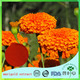 traditional herb Tagetes erecta extract powder/African marigold extract powder Mexican marigold extract powder
