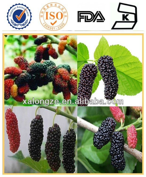 100% Organic Mulberry Leaf or mulberry Morus alba muberry leaf extract/mulberry fruit extract