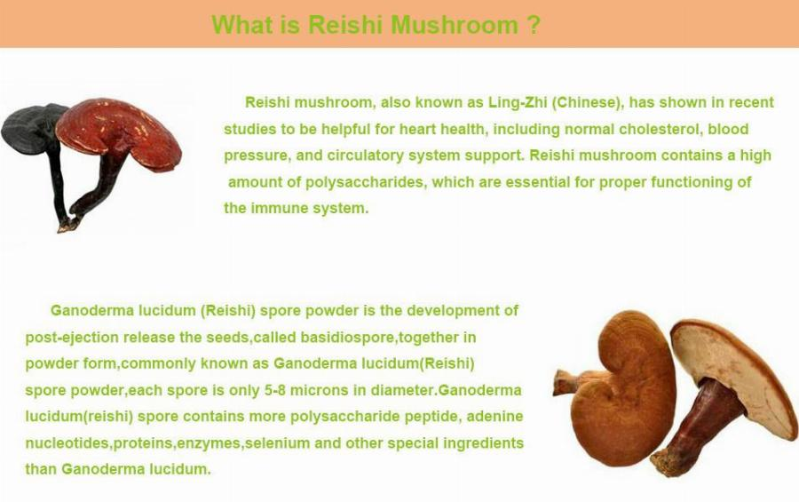 GMP Factory Supply 100% Natural Ganoderma Lucidum/Reishi Mushroom Extract, Ganoderma/Reishi Mushroom Powder