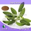 high quality sage extract / salvia extract
