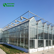 High Efficient Venlo Tempered Glass Greenhouse With Hydroponic Growing System