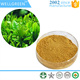 ISO Certificate Green Tea Extract l theanine Powder,l-theanine 98%