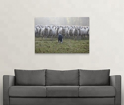 Flock of Sheep Facing a Border Collie Canvas Wall Art Animal Canvas Print