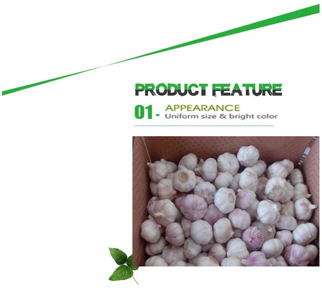 Good price new crop garlic import from china