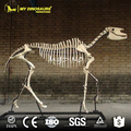 NY DINO-Museum Replica Full Sized Hipparion Skeleton for Sale