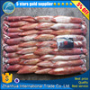 New arrive frozen squid!bloligo edulis , lamps for squid