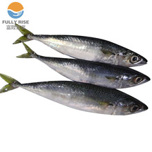 frozen Mackerel fish scomber japonicus 400-600 price for Russia