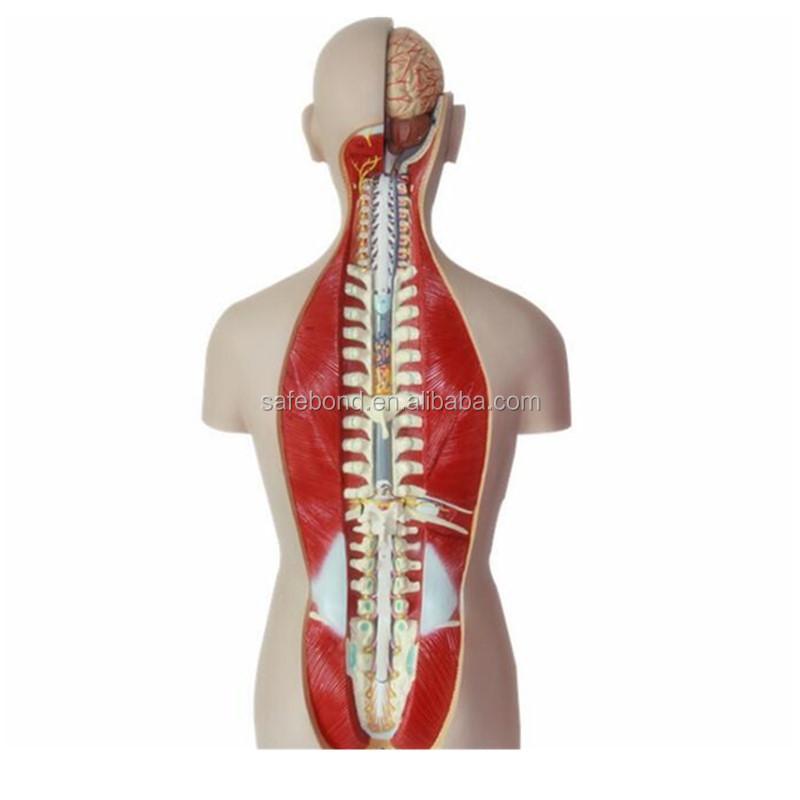 Head Human Body Wholesale Human Body Suppliers Alibaba