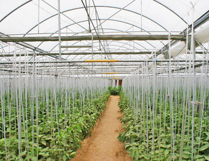 The Cheapest Hot Sale Mappower Agricultural/Commercial Plastic Greenhouse