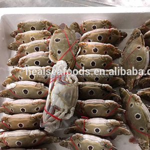 good quality blue swimming crab meat frozen crab