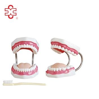 release date picked up best sneakers Denti Umani(32 Denti) Per La Vendita - Buy Denti Umani,Denti Modello,Denti  Modello Con Pennello Product on Alibaba.com