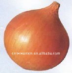 small red fresh onion from China