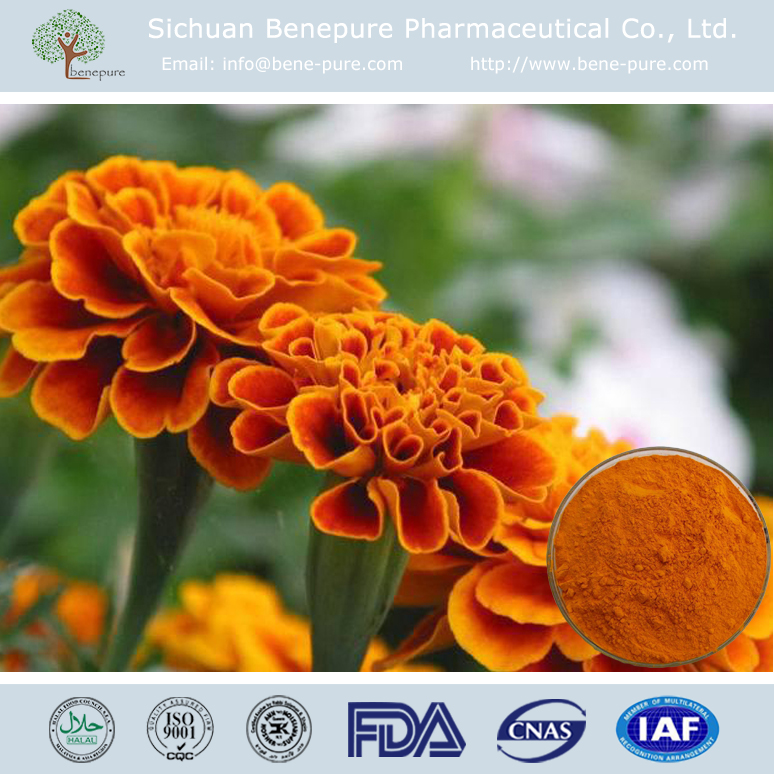 Natural Pigment Xanthophyll Marigold Extract with high content Lutein