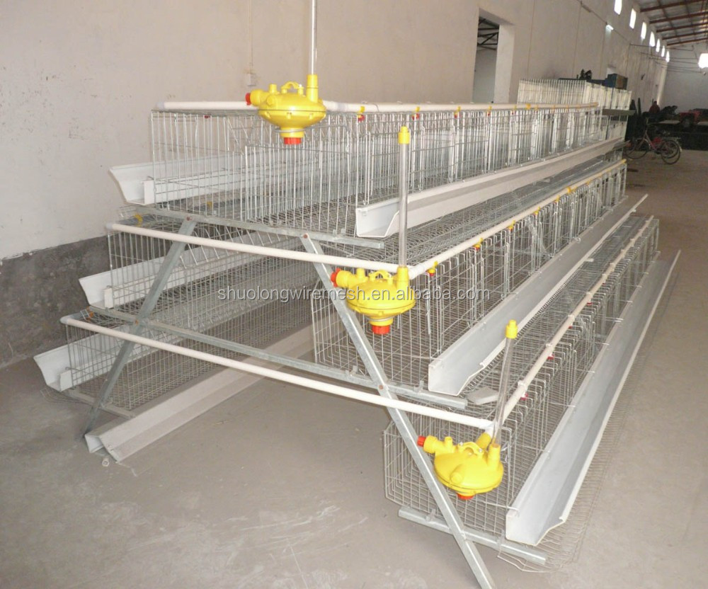 Free range housing furthermore Building Free Range Chicken Houses additionally santrev moreover Poultry Housing Design And Materials likewise Layer Poultry Cages Egg Laying Cages 60560662207. on poultry broiler house design