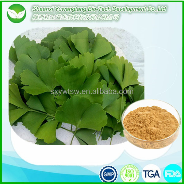 Top quality ginkgo biloba extract powder for treatment high blood pressure from China suppliers