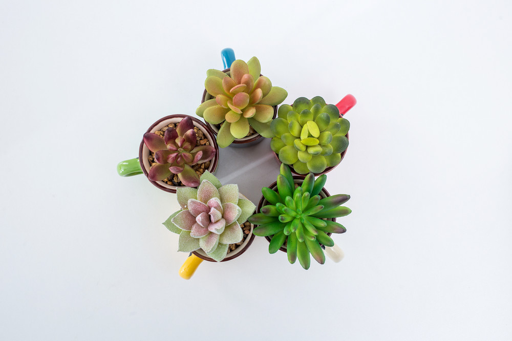 cheap wholesale mini assorted ceramic potted indoor outdoor home garden decorative artificial plants succulent bonsai for sale