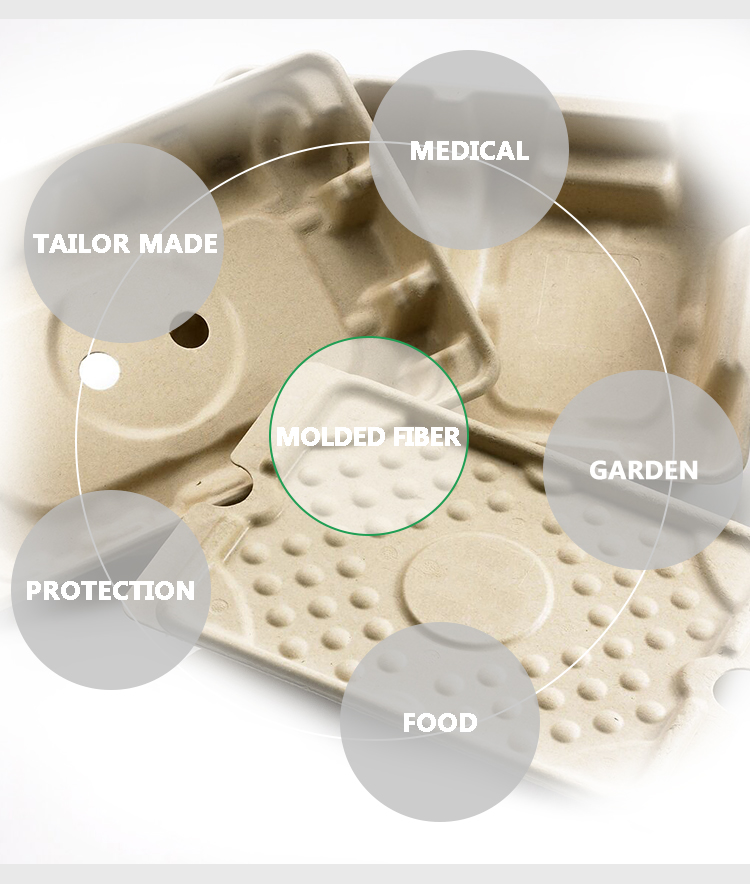 Compostable Molded Paper Pulp Box Packaging