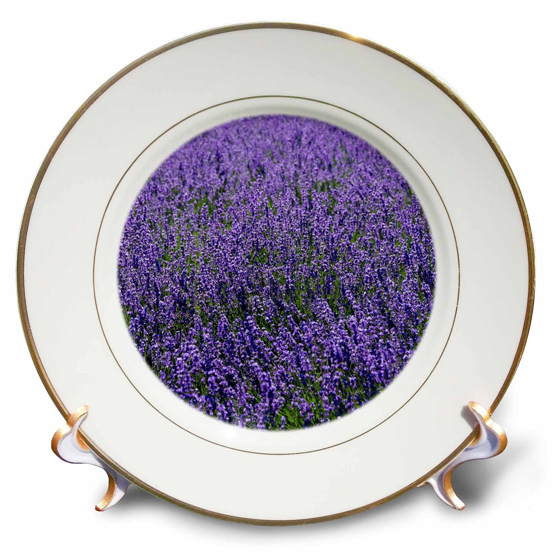 Danita Delimont - Flower - Lavender, Furano, Hokkaido Prefecture, Japan - 8 inch Porcelain Plate (cp_225872_1)