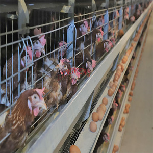 Mature design full automatic h type layer chicken cage south africa