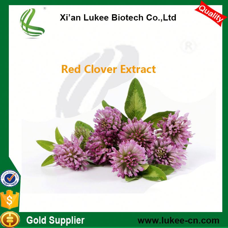 Hot sale Plant extract Organic red clover herb extract/Red clover P.E./Redclover powder extract CAS NO. 85085-25-2