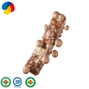Farm superior quality shiitake mushroom sawdust spawn bags