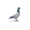 ISO18000-6C UHF RFID pigeon tracking tag for chicken and pigeon with Impinj Monza 4QT