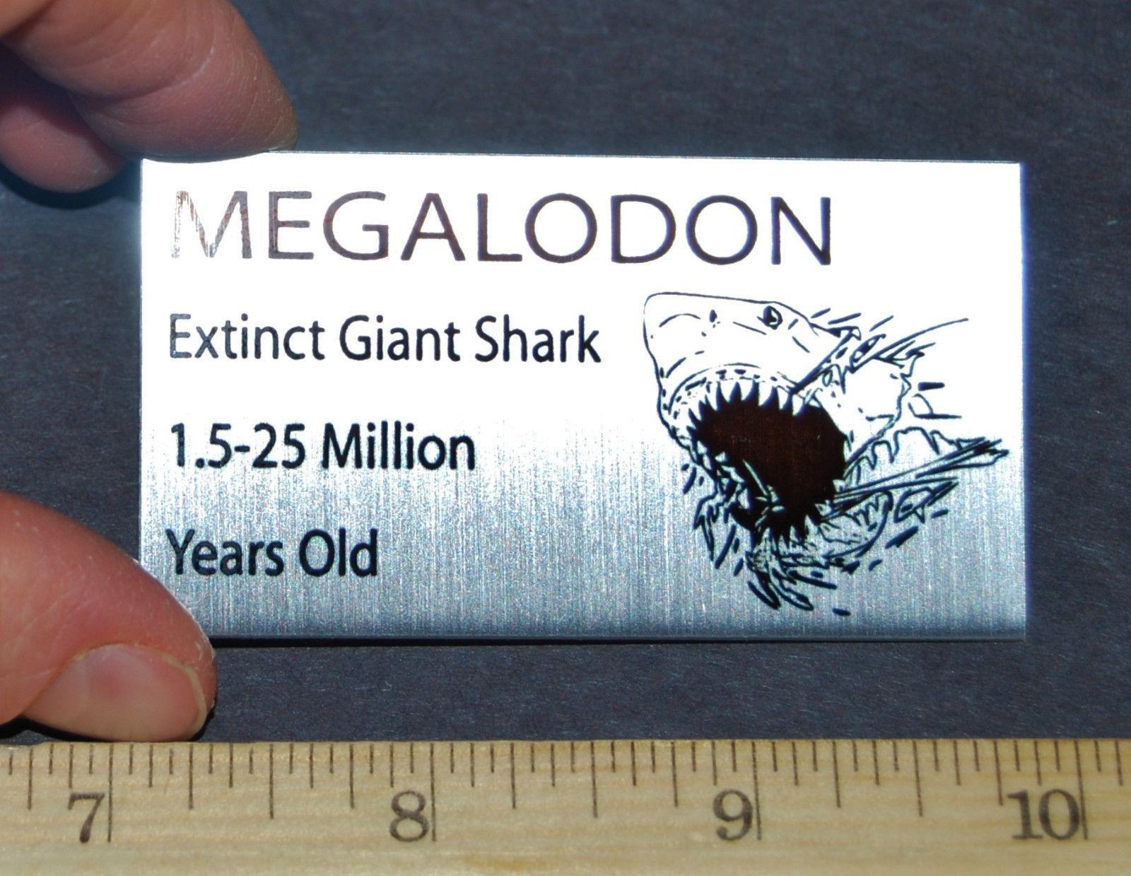 Buy MEGALODON Tooth Fossil Extinct Shark Metal Display Label