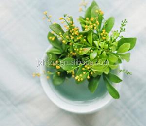 Pure aglaia odorata aglaia odorata in flavour & fragrance Organic Aglaia  odorata absolute essential oil