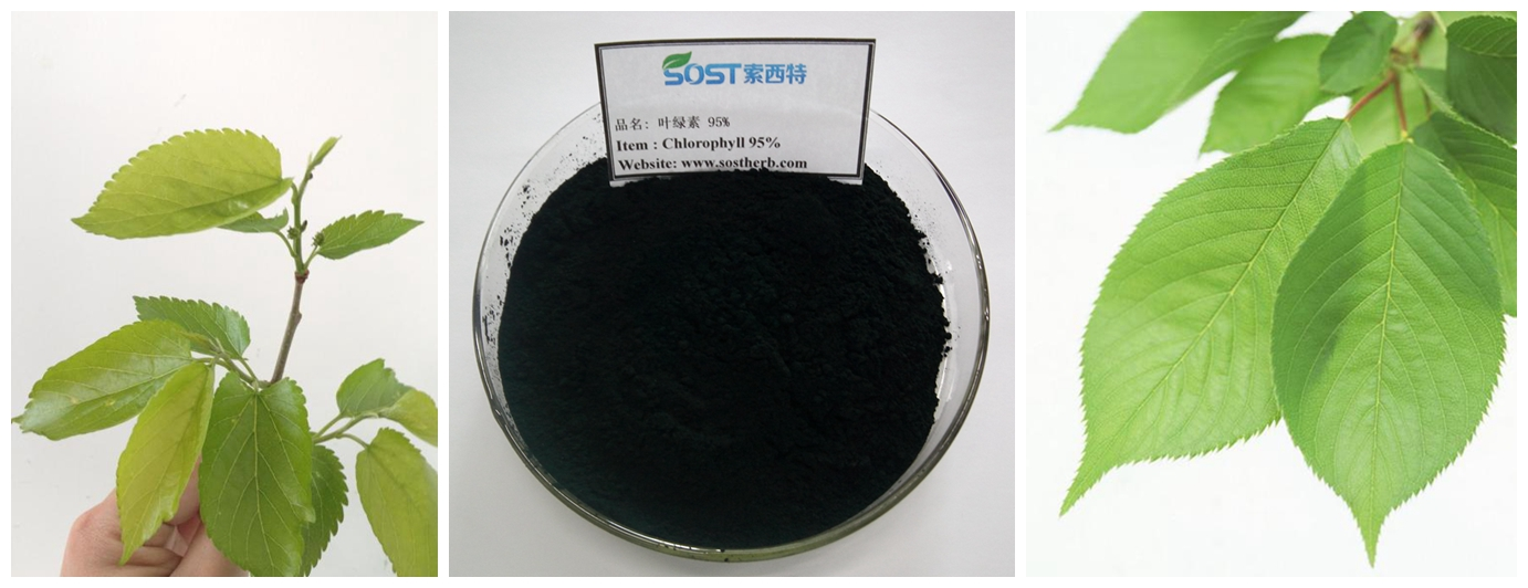 Food Color Pure Organic Chlorophyll Extract Powder.jpg