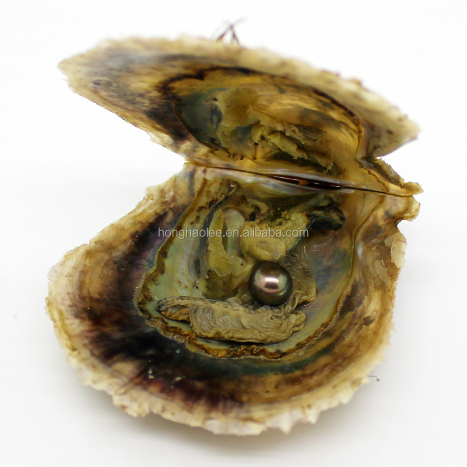grade 7-8mm color #11 vacuum packed oysters akoya pearl oyster saltwater pearl oyster many colours stock free shipping