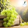 Nutritional Supplements Immune Support Grape Skin Extract 30% Polyphenol 5% Resveratrol 20% OPC