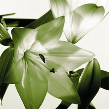 Modern art paintings photo to canvas print lily flower painting