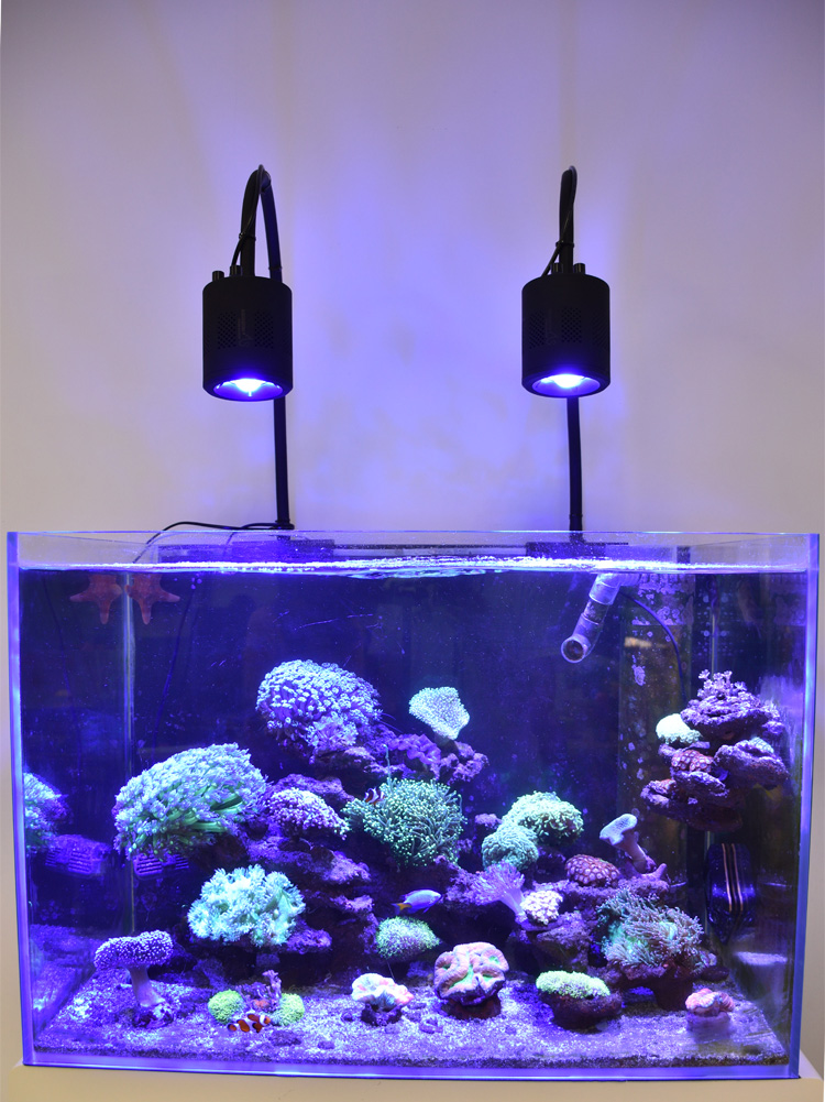 Asml As Satellite Series Led Marine Aquarium Lighting Reef C Light View System Solution Product Details
