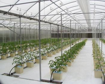 Drip Irrigation Hydroponic System Dutch Bucket For