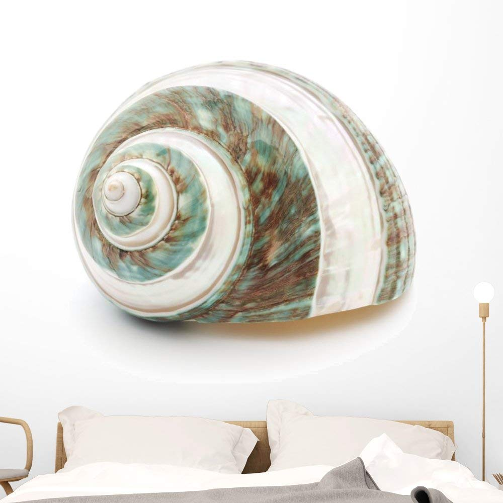 Wallmonkeys Sea Shell Wall Decal Peel and Stick Graphic (48 in W x 39 in H) WM229656