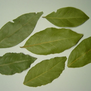Best price wholesale non-pollution bay leaves for sale