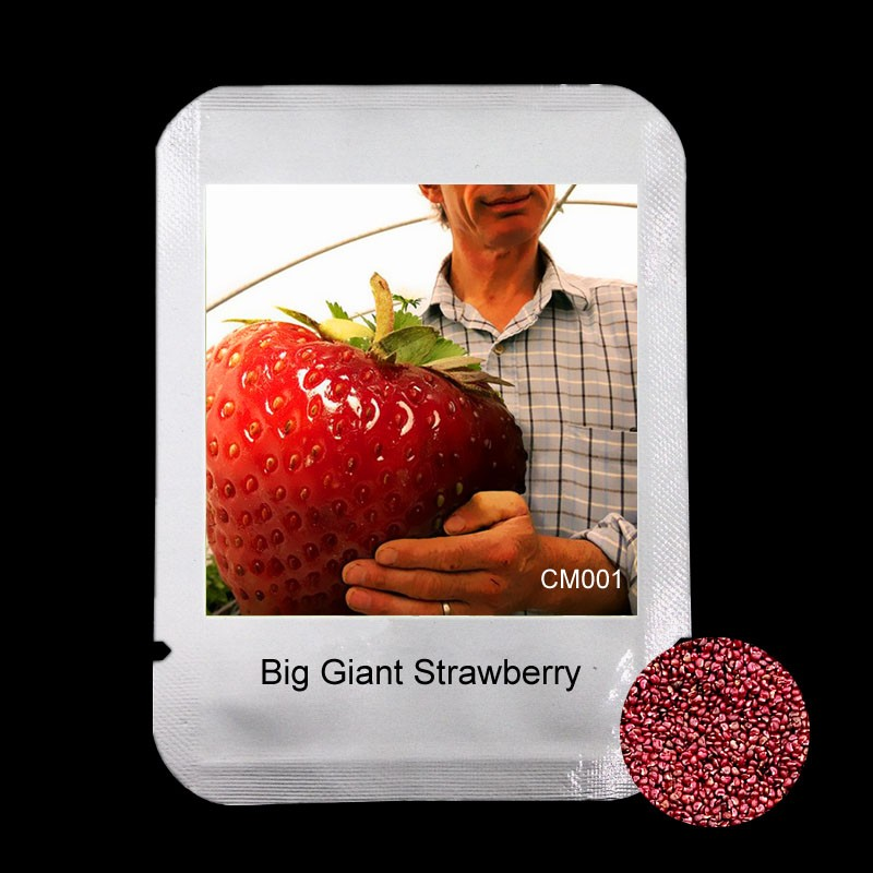 100 PCS Big Giant Strawberry Seeds, Rare Sweet Four-season Fruit and vegetable Seeds, New Packaging Garden plants , #CM001