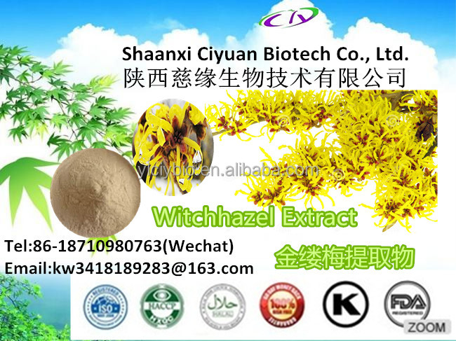 Pure Natural of Hamamelis Extract for Low Market Price and Wholesaler