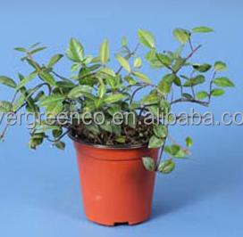 Garden Pots For Sale Planting Pots Cheap Plant Pot Buy Garden Pots For Sale