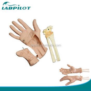 Discerptible Wrist Arthroscopy Training Simulator Vivid Hand Joint