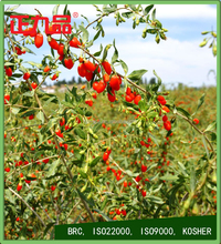 High Quality Goji Berry with Competitive Price