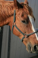 Horse Equipment Rope adjustable Horse Halter/headcollar with lead rope