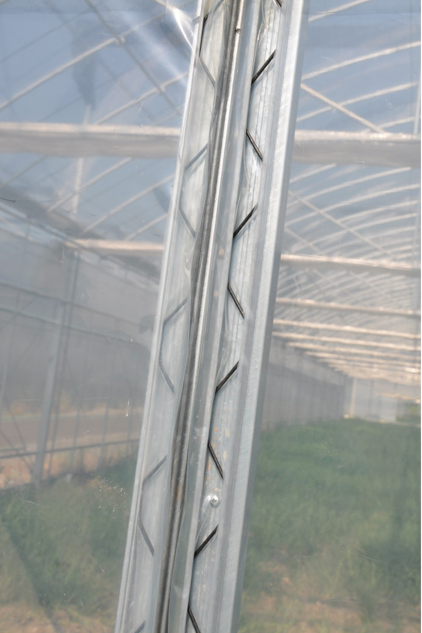 Wiggle wire zigzag for greenhouse film lock buy