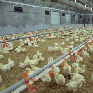 Automatic poultry chicken feeders for poultry chickens 0086-18231821782