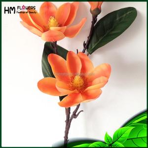 Orange Magnolia Orange Magnolia Suppliers And Manufacturers At