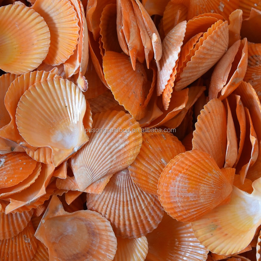 China Sea Scallop Wholesale With Factory Price