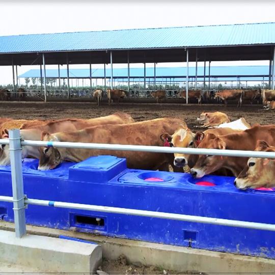 azul por ejemplo, para caballos, vacas... Bebedero de pl/ástico de calidad