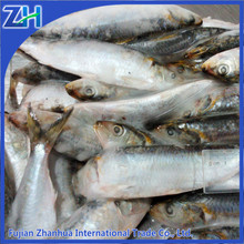 seafood supplier frozen sardine tin cans for food canning fish